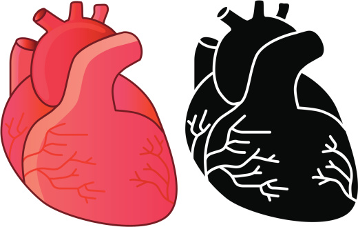 clipart of a human heart - photo #22