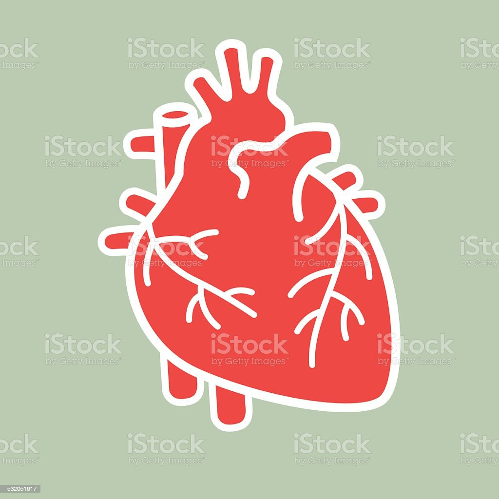 Human heart vector vector art illustration