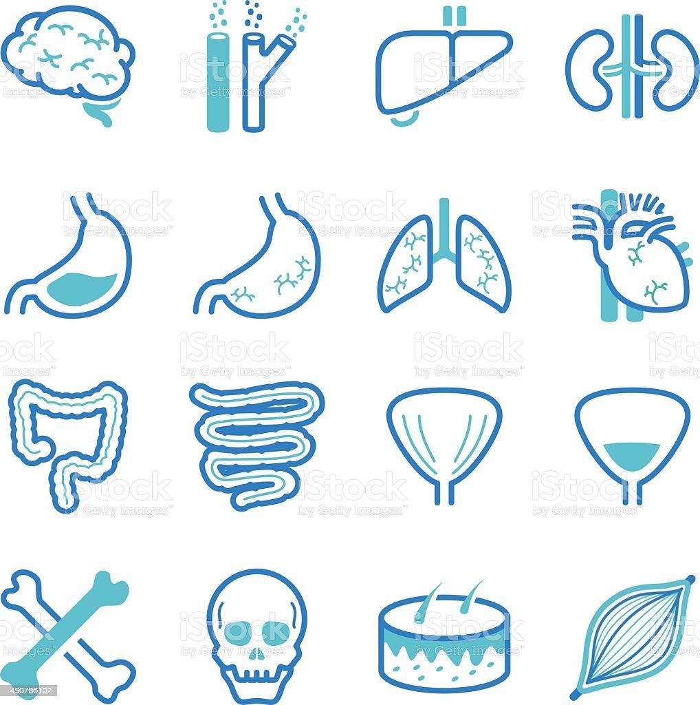 Human Internal Organ icons set vector art illustration