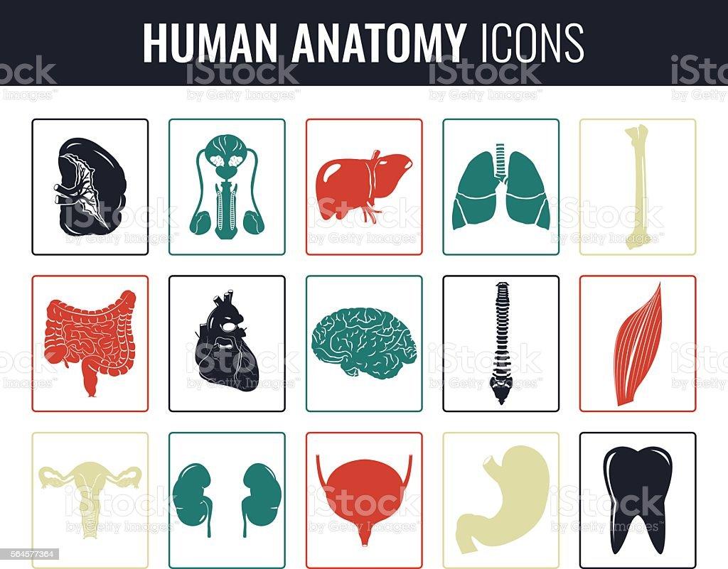 Human internal organs. Anatomy set. Vector icons royalty-free stock vector art