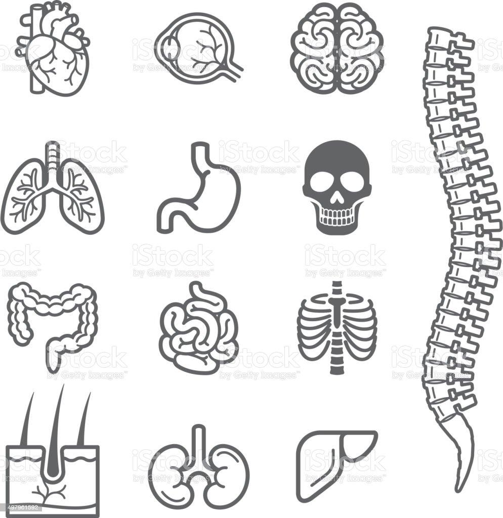 Human internal organs detailed icons set. vector art illustration