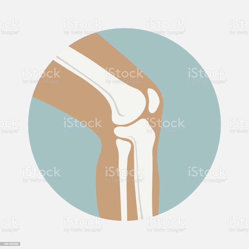 Human knee joint vector art illustration