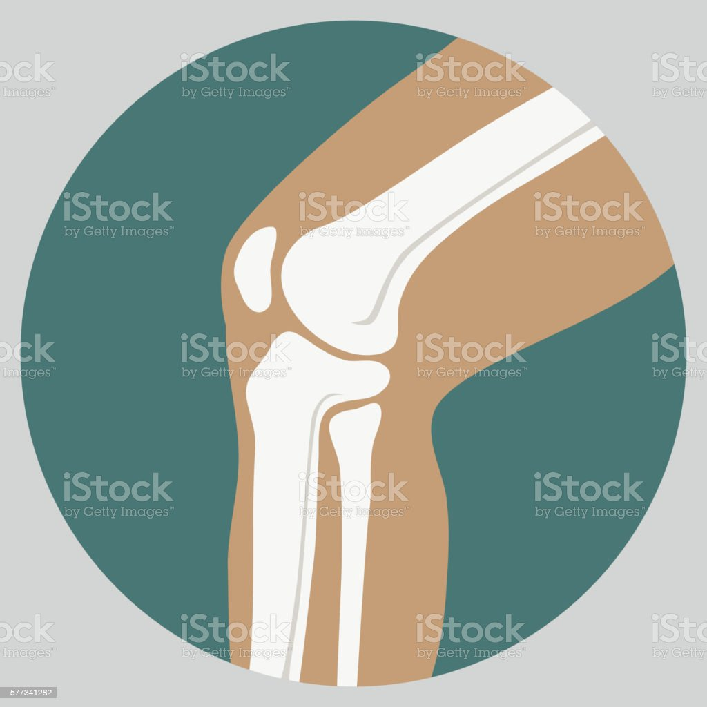 femur clip art vector images amp illustrations istock
