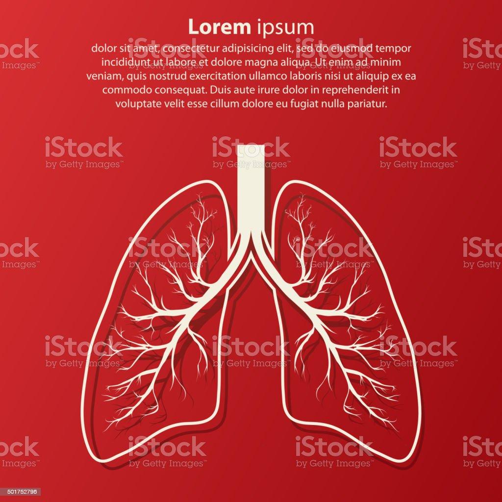 Menschliche Lunge Anatomieillustration Vektor Illustration 501752796 ...