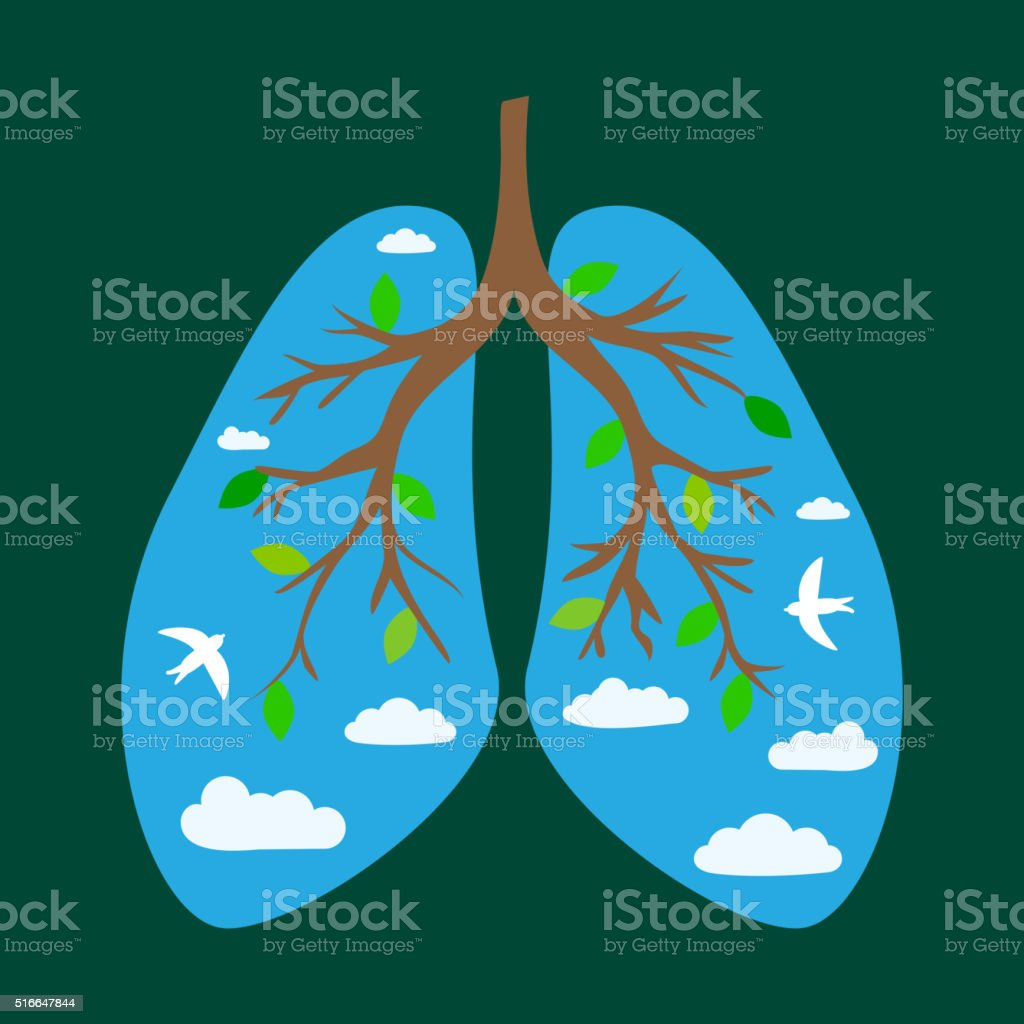 Human lungs vector art illustration