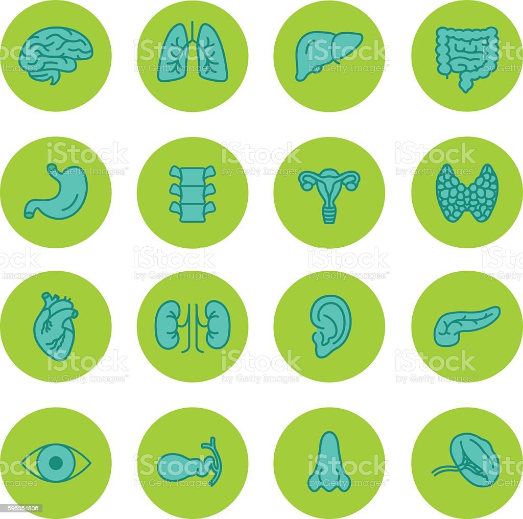 Human Organs Vector Icons Set vector art illustration