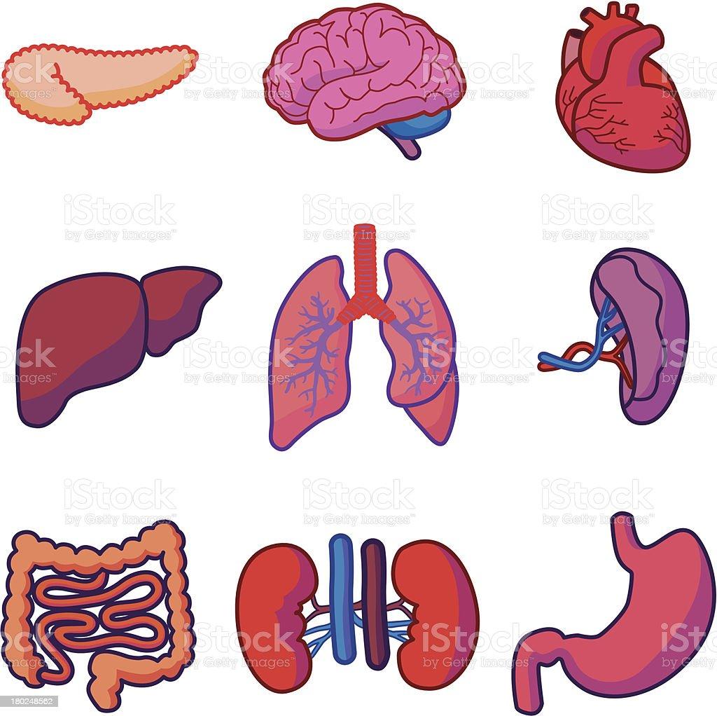 human organs vector art illustration