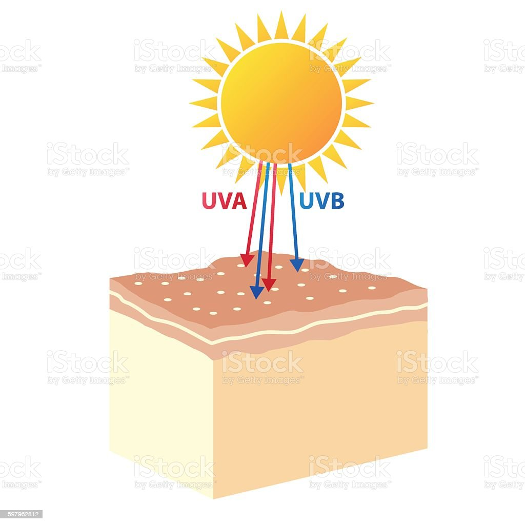 human skin from UVA , UVB ray vector art illustration