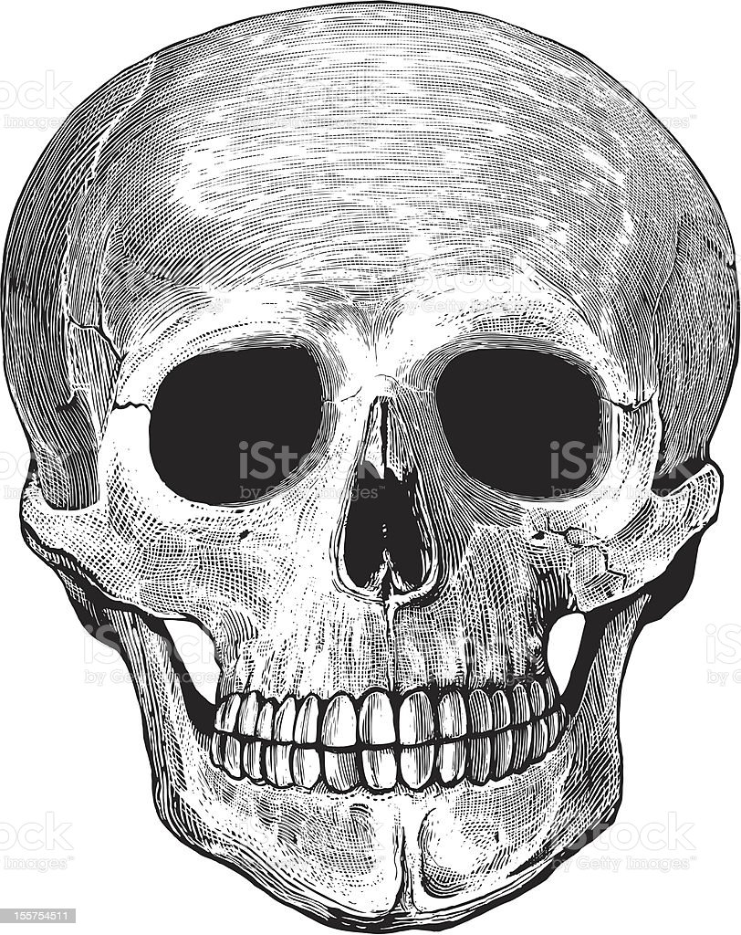 Human skull in engraved style royalty-free stock vector art