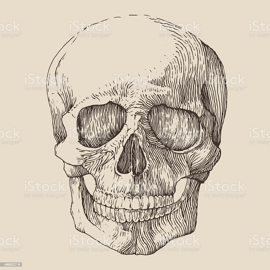 human skull, vintage illustration, engraved retro style, hand drawn, sketch vector art illustration