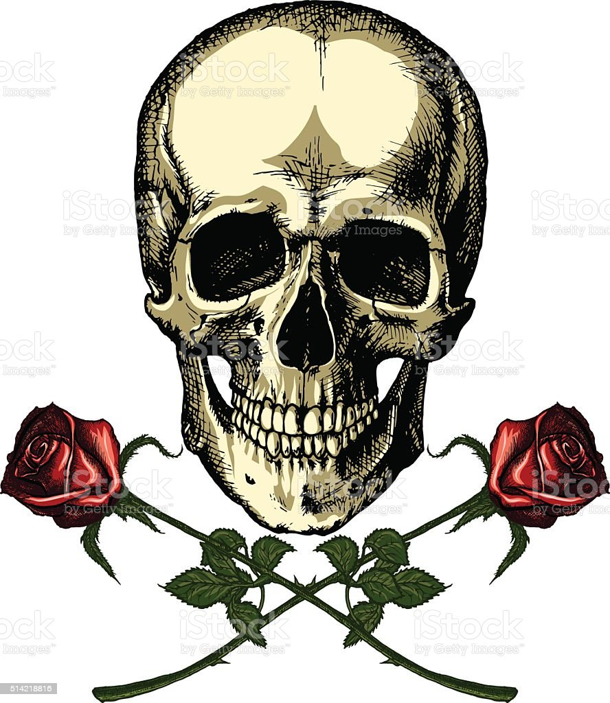 Human skull with two roses on white background vector art illustration