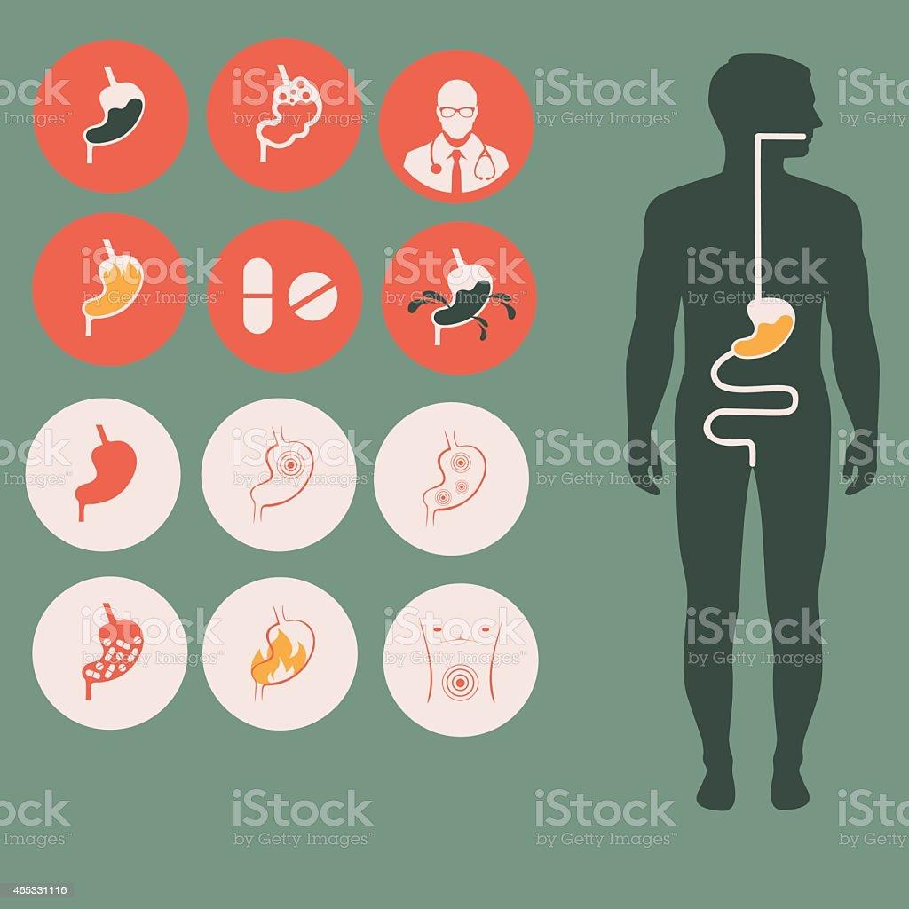 human stomach anatomy, vector art illustration