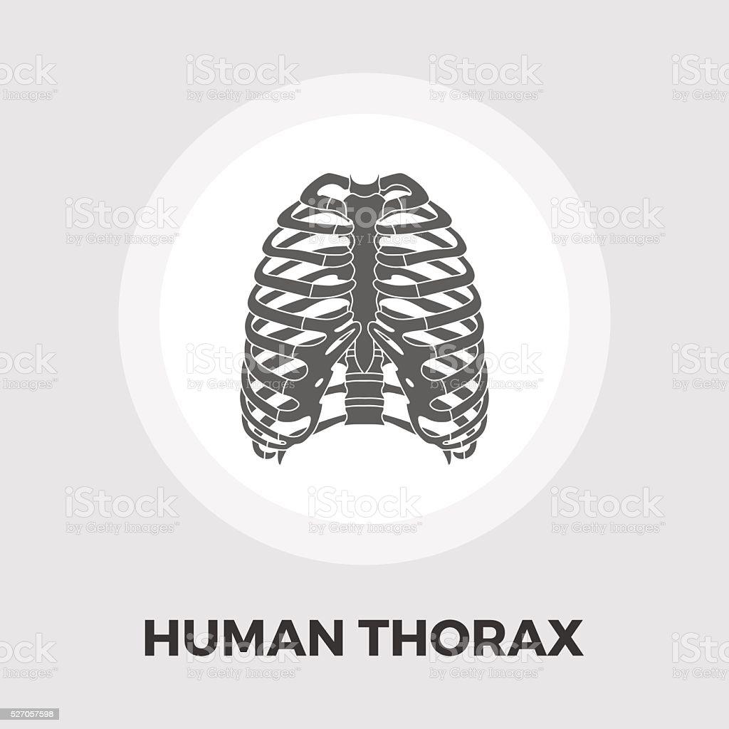 Menschliche Thorax Flaches Symbol Vektor Illustration 527057598 | iStock