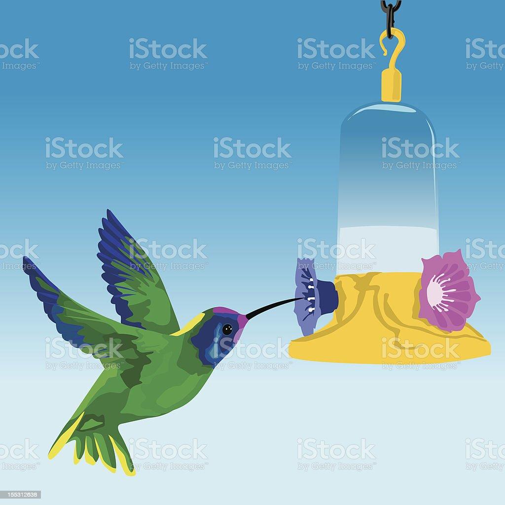 Humming bird and feeder vector art illustration