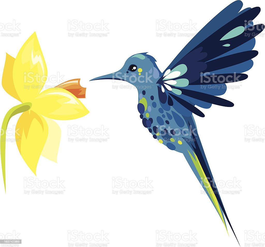 Colibri royalty-free stock vector art