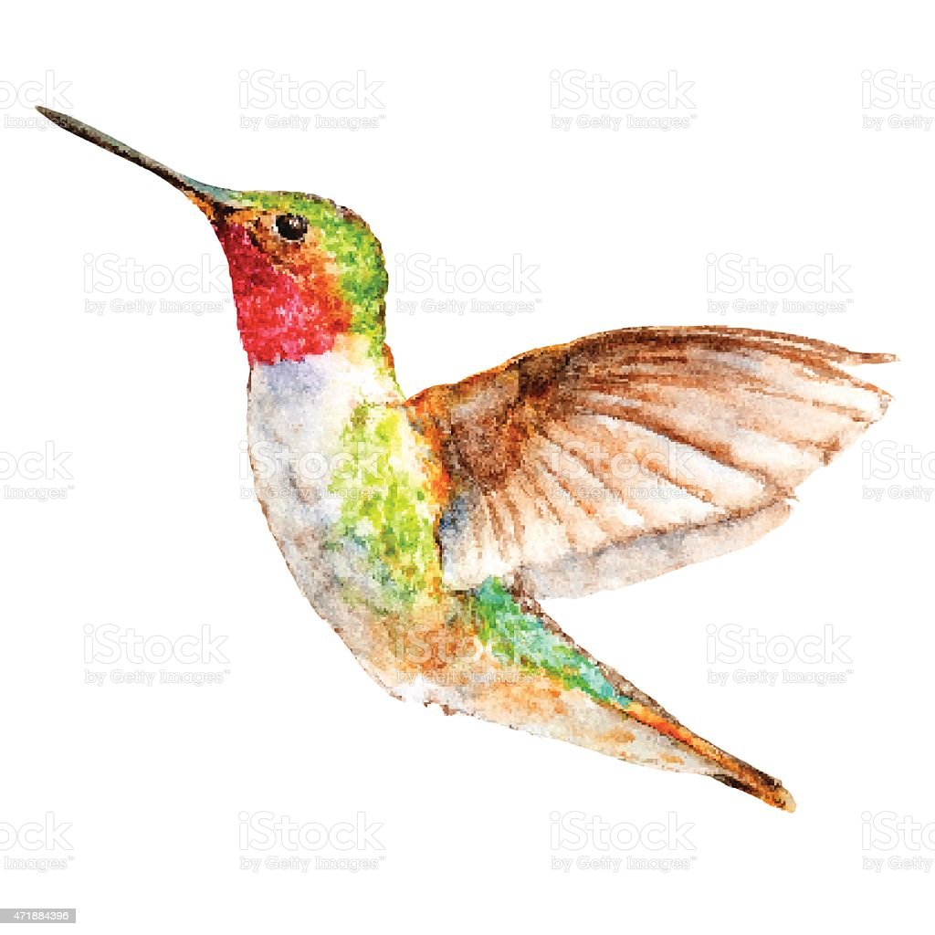 Hummingbird Watercolor Sketch, Vector Illustration. vector art illustration