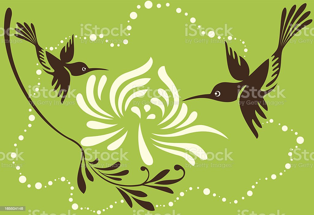 Hummingbirds & Chrysanthemum royalty-free stock vector art