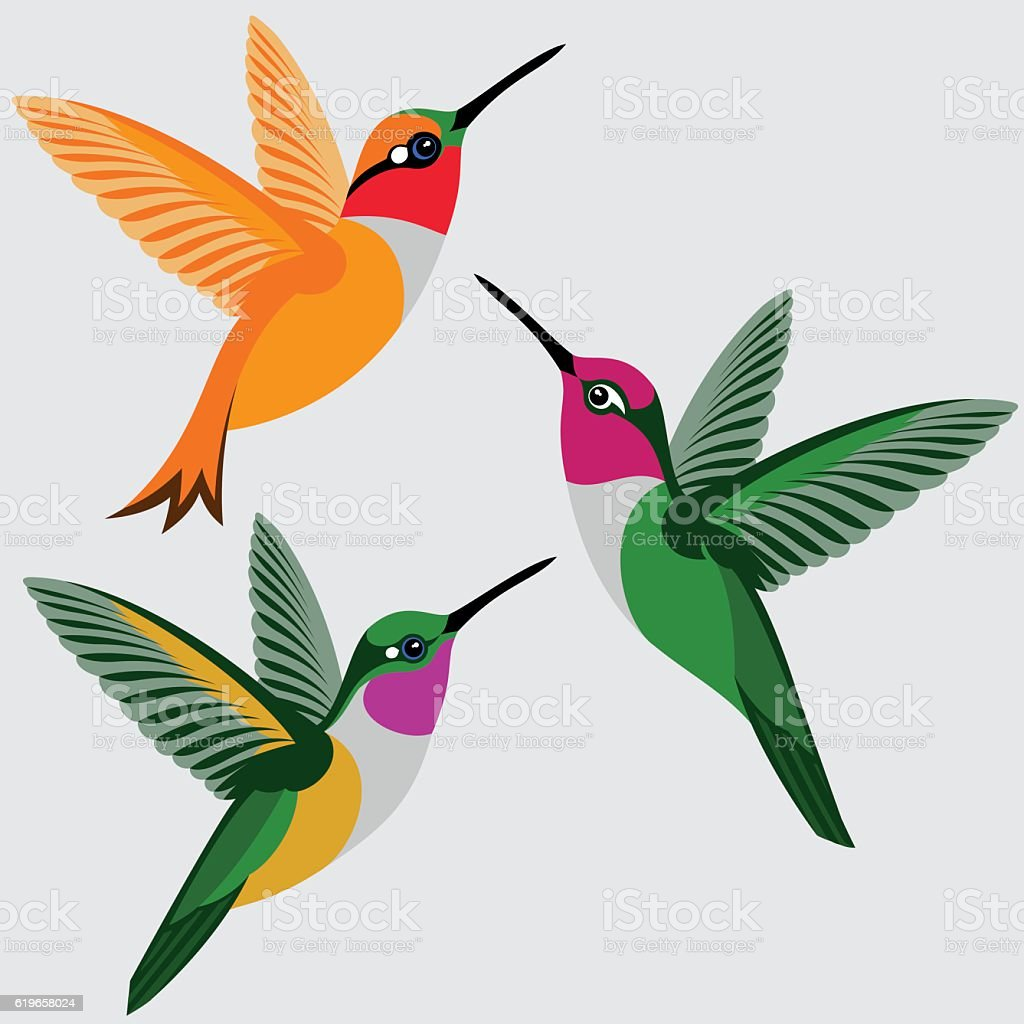 Hummingbirds Set - Rufous Hummingbird, Anna's Hummingbird, Bahama Woodstar Hummingbird vector art illustration