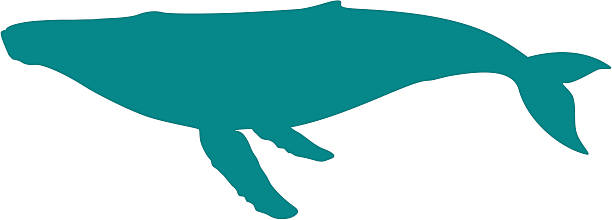 Whale Clip Art, Vector Images & Illustrations - iStock
