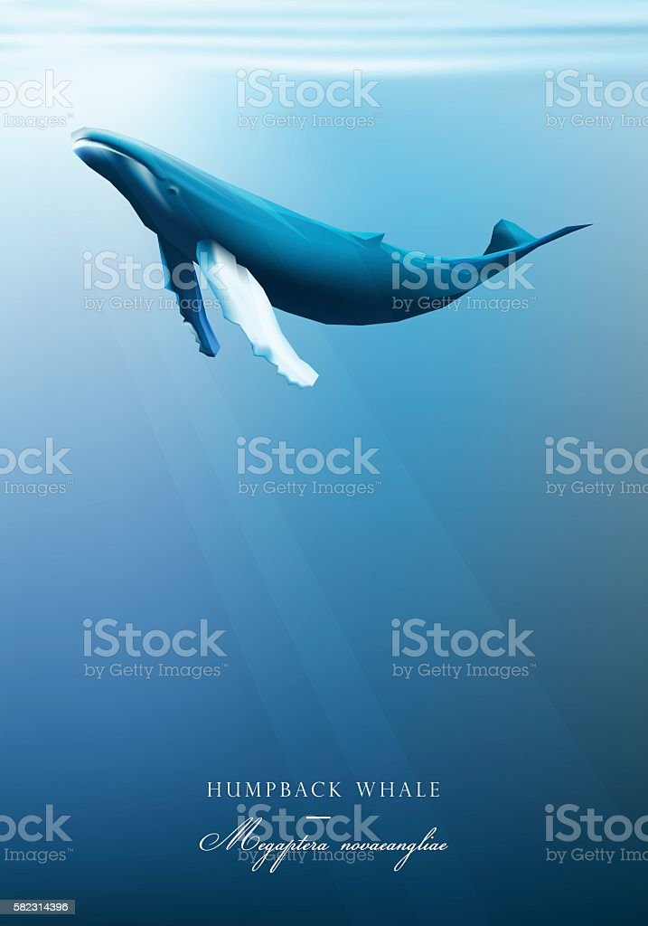 Humpback whale swimming under the blue ocean surface vector art illustration