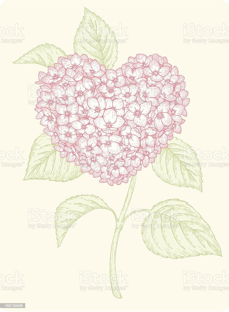 Hydrangea-heart royalty-free stock vector art