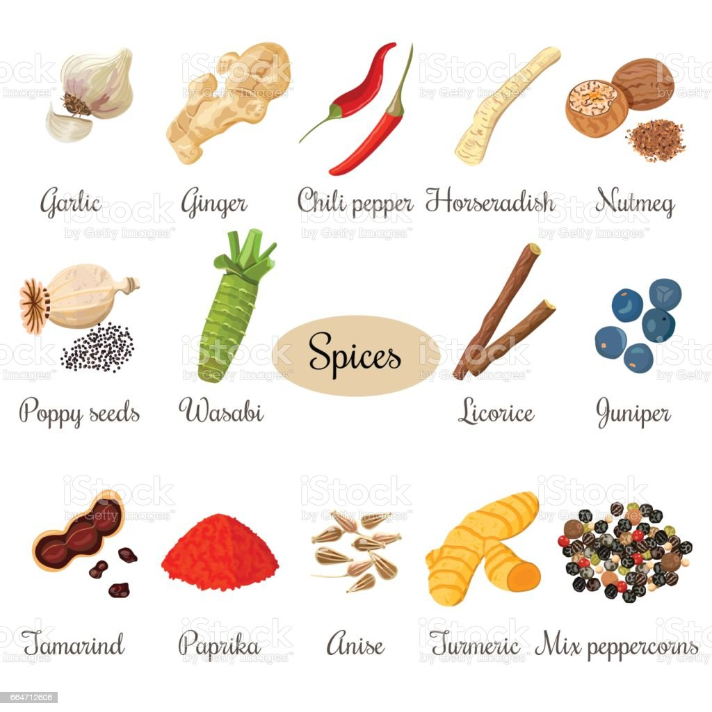 Icon big set of popular culinary spices vector art illustration