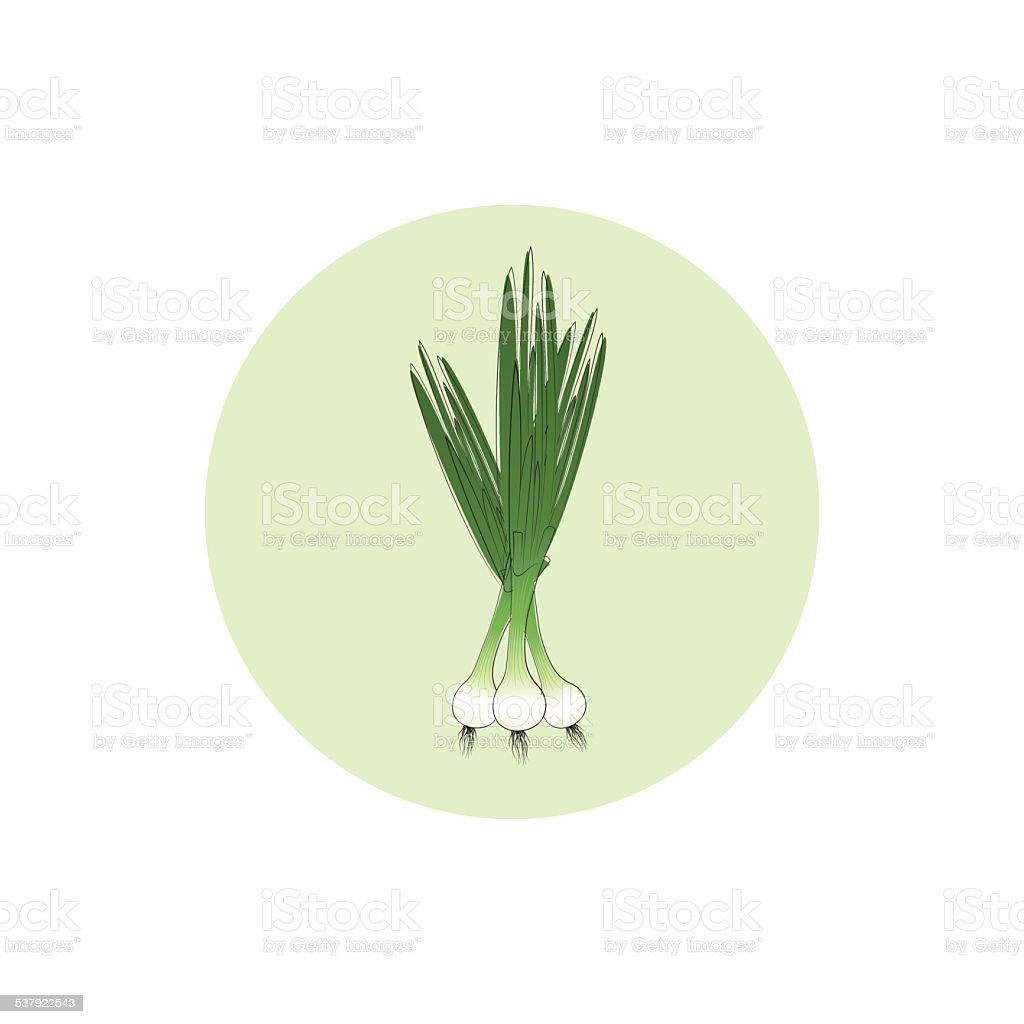 Icon green onion,vector illustration vector art illustration