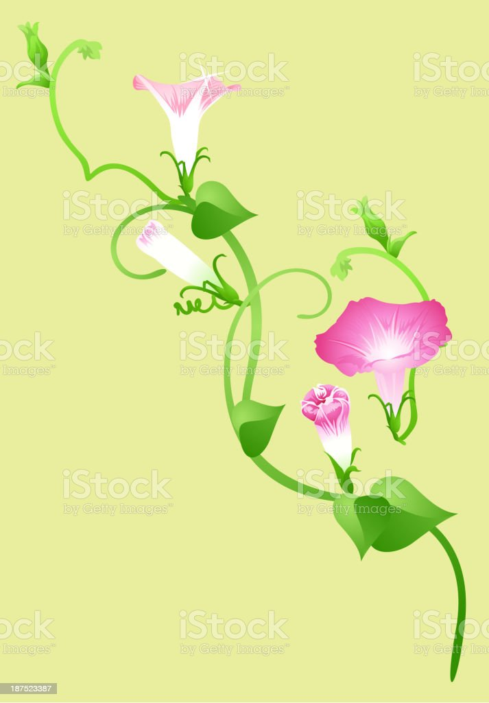 icon morning glory royalty-free stock vector art
