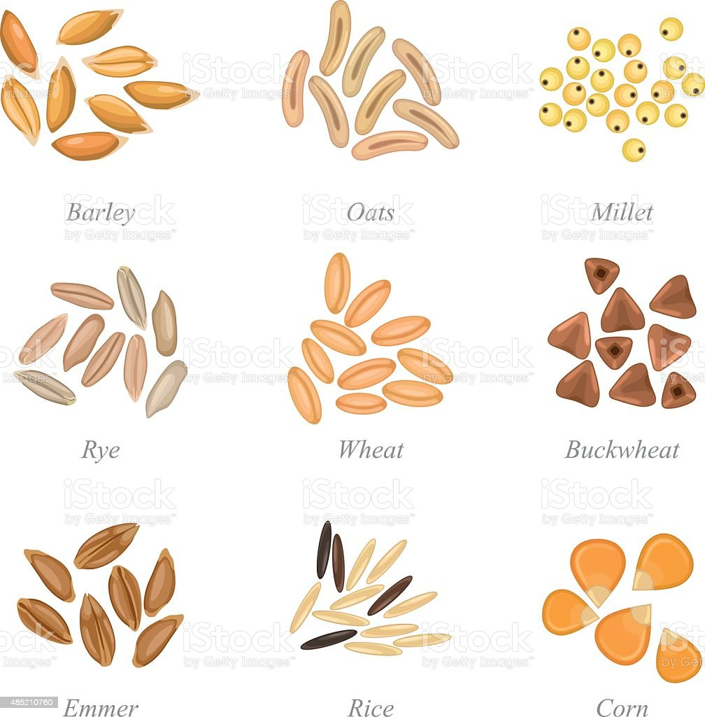 Icon set of cereal grains part 3 vector art illustration
