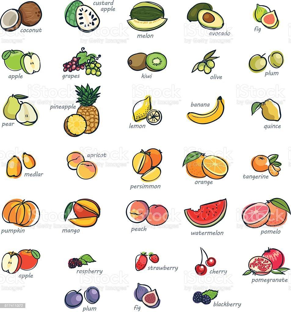 Icon set of fruits vector art illustration