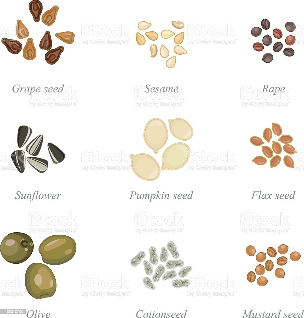 Icon set of oilseeds and oil fruits vector art illustration