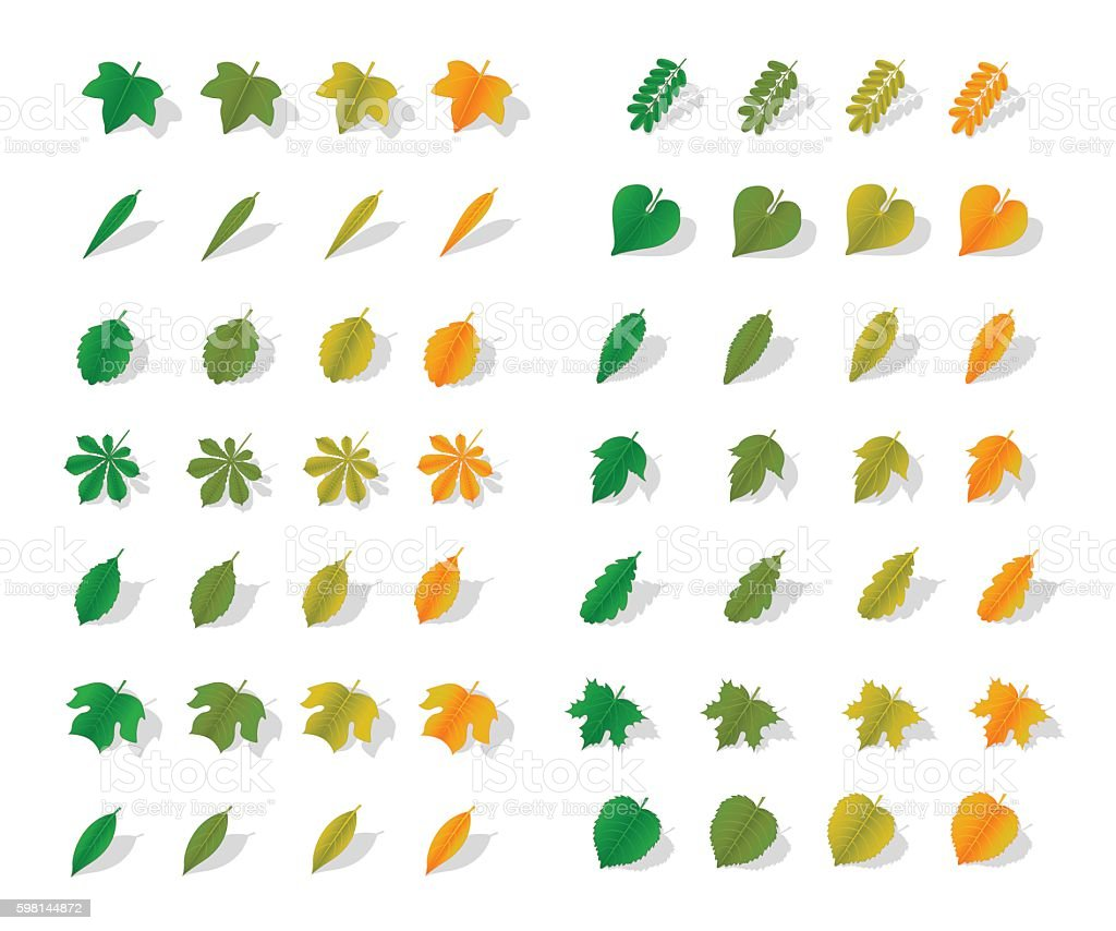 Icons yellow leaves vector art illustration