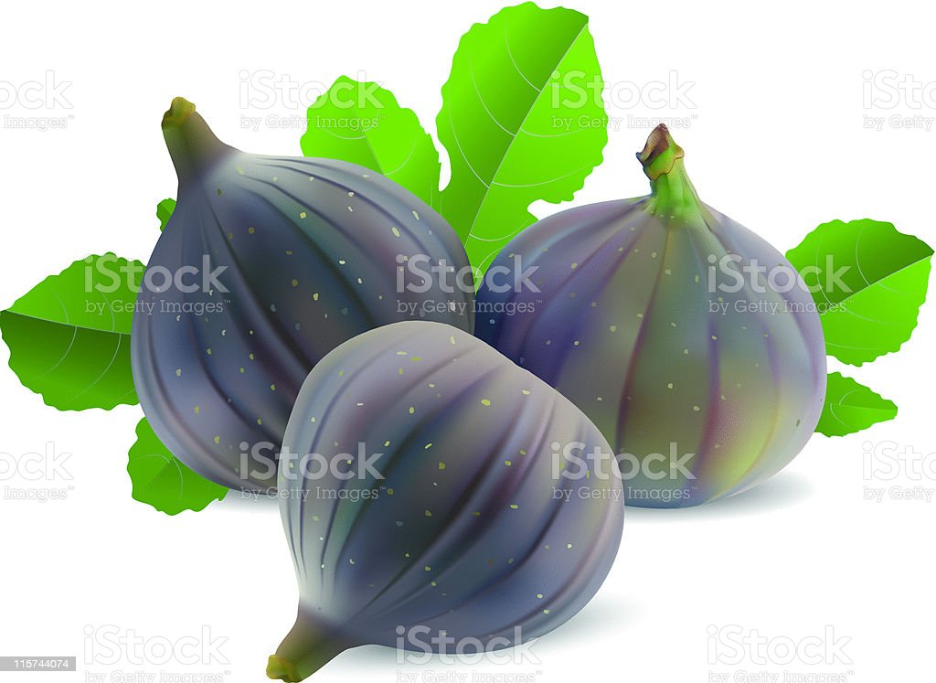 Illustrated whole ripe figs isolated on white vector art illustration