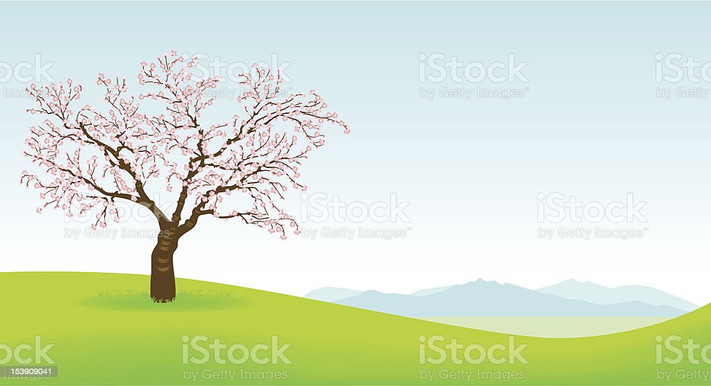 Illustration of a cherry blossom tree with green grass vector art illustration
