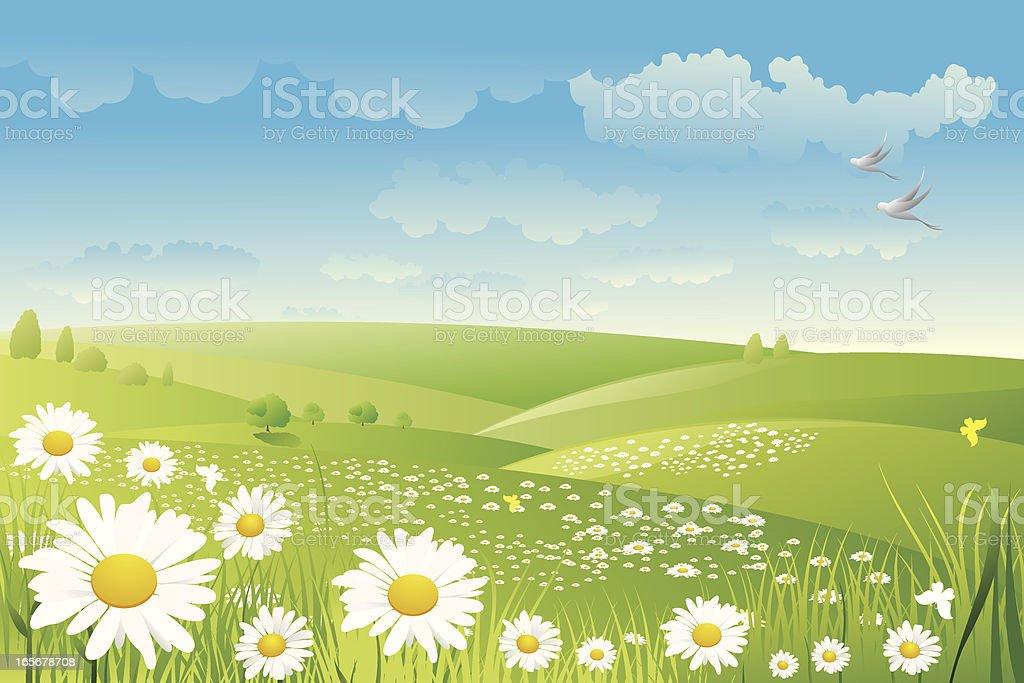 Illustration of a daisy flower field royalty-free stock vector art