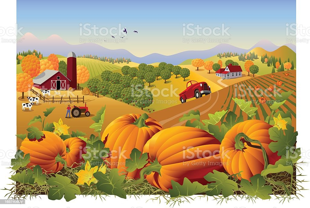 Illustration of a farm and field in autumn with pumpkins vector art illustration