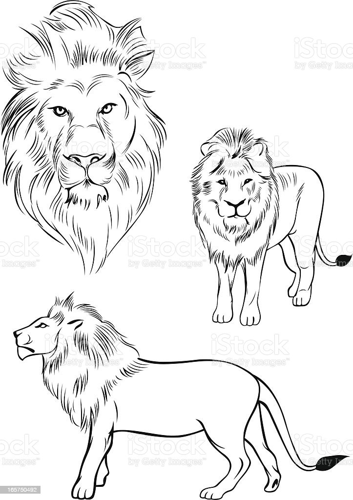 Illustration of a lion vector art illustration