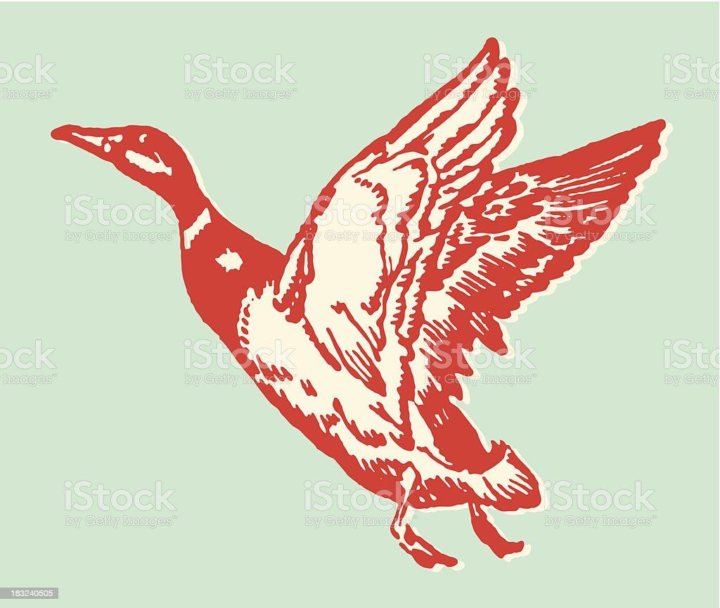 Illustration of a red duck in flight vector art illustration