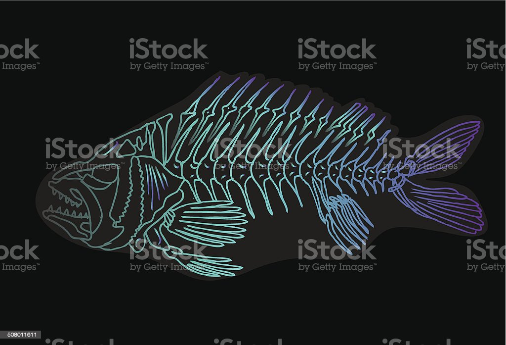 Illustration of a x-ray tetra cartoon fish. royalty-free stock vector art