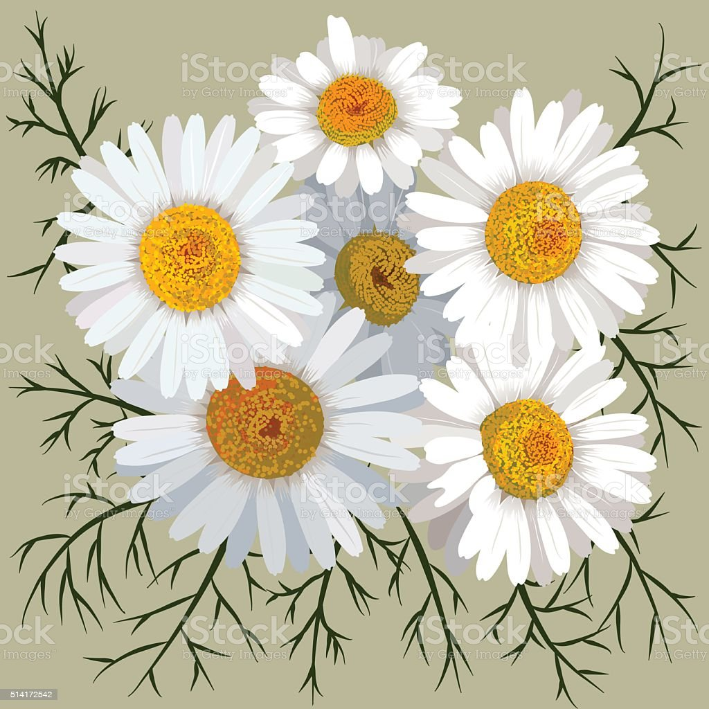 Illustration of camomile flower (chamomile) isolated on color background vector art illustration