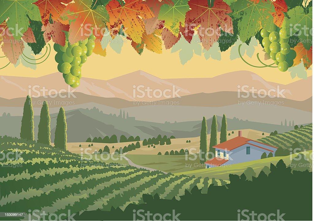 Illustration of colorful Tuscan vineyard landscape royalty-free stock vector art