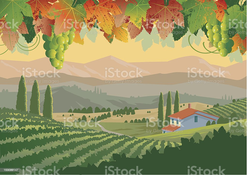 Illustration of colorful Tuscan vineyard landscape vector art illustration