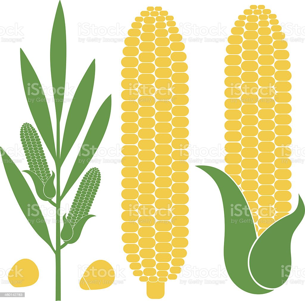 Illustration of corn in different forms and figures vector art illustration