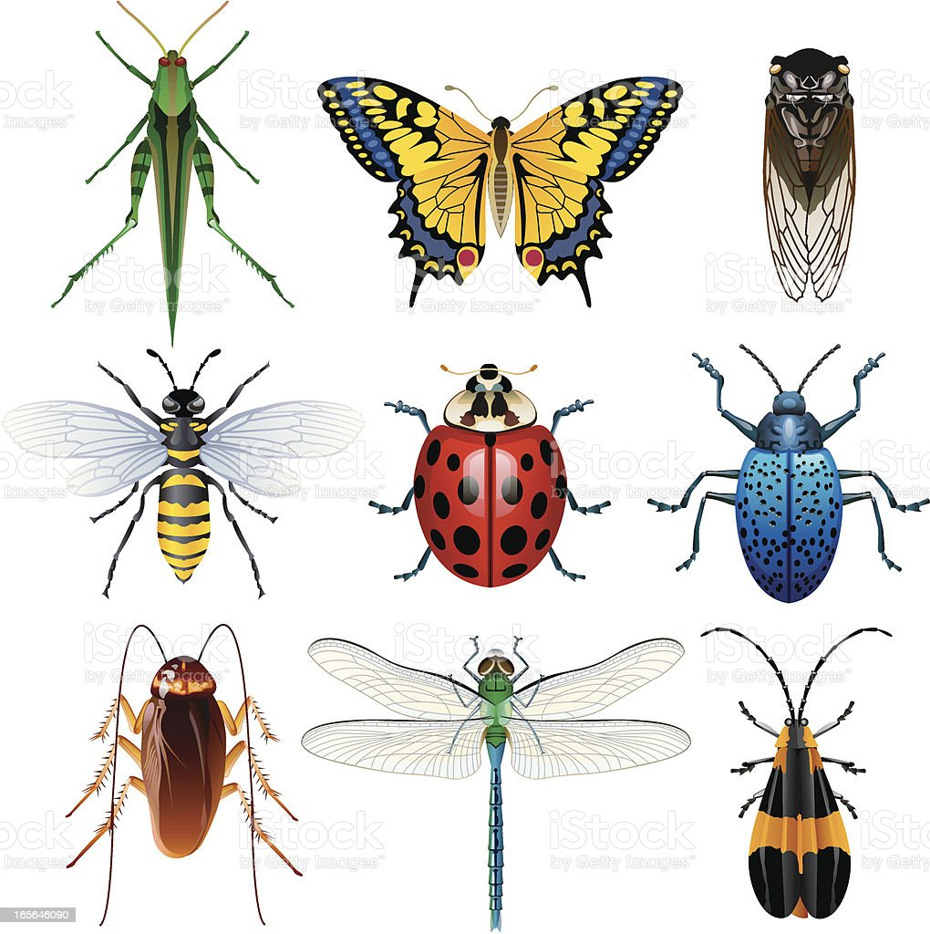 Illustration of different insects vector art illustration