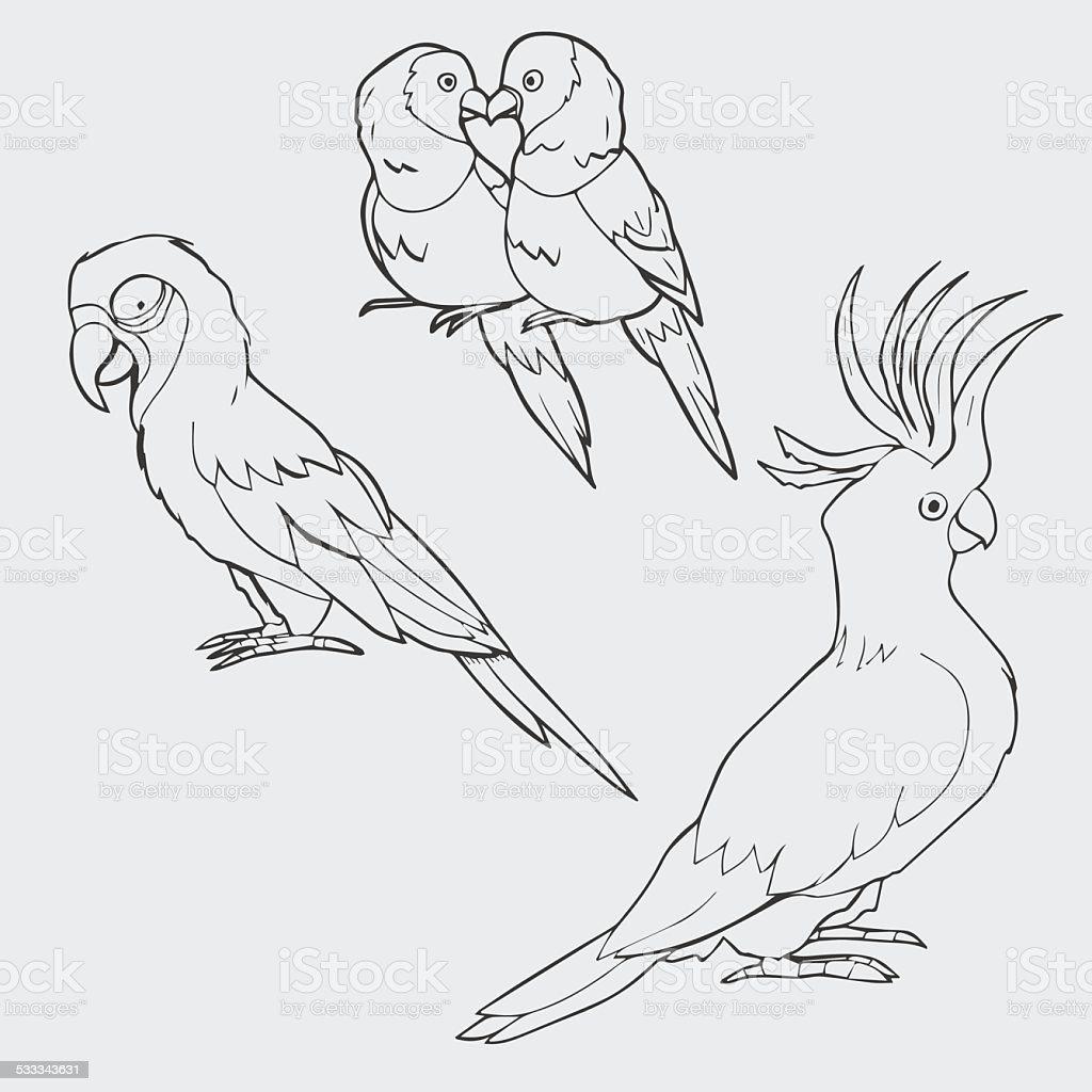 Illustration of macaw, lovebirds and cockatoo parrots vector art illustration