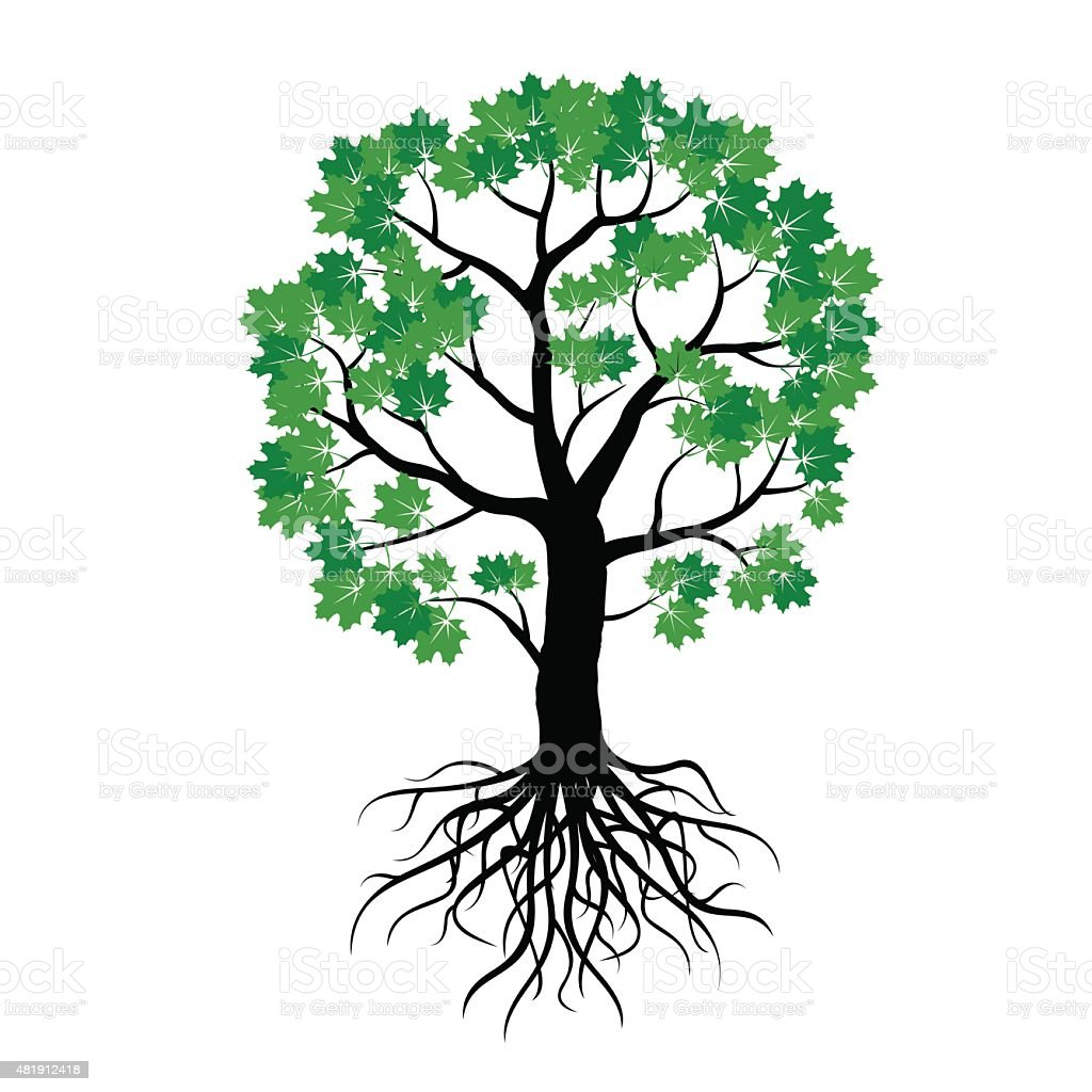 Illustration of Maple Tree and Roots vector art illustration
