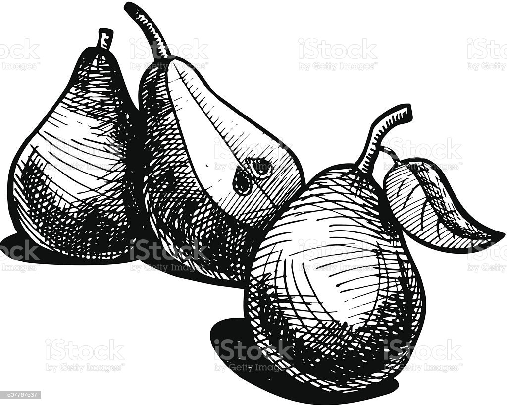 illustration of pear royalty-free stock vector art