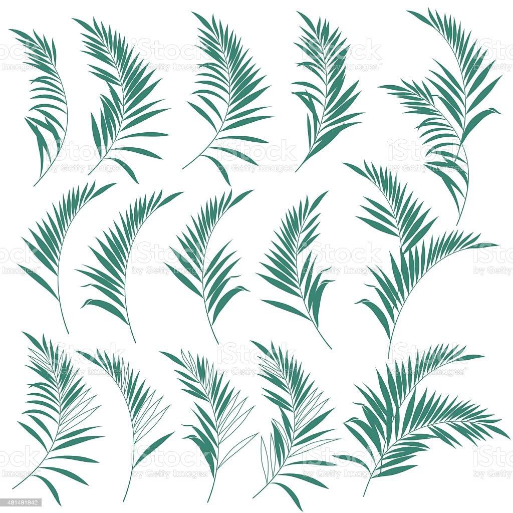 Illustration of the fern vector art illustration