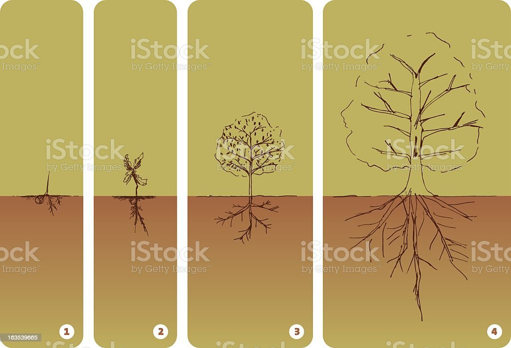 Illustration of the lifecycle of a tree royalty-free stock vector art