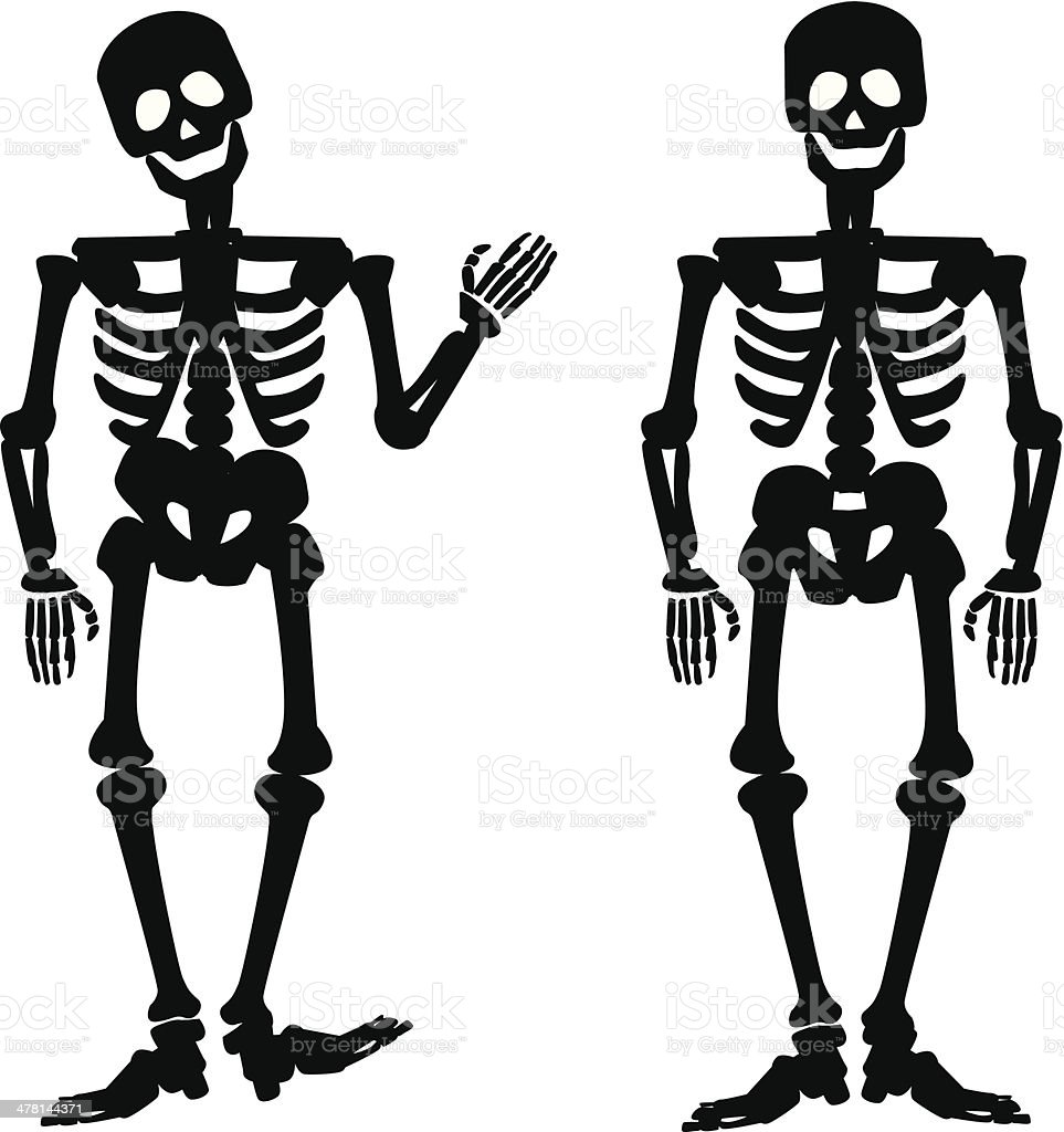 human skeleton clip art, vector images & illustrations - istock, Skeleton